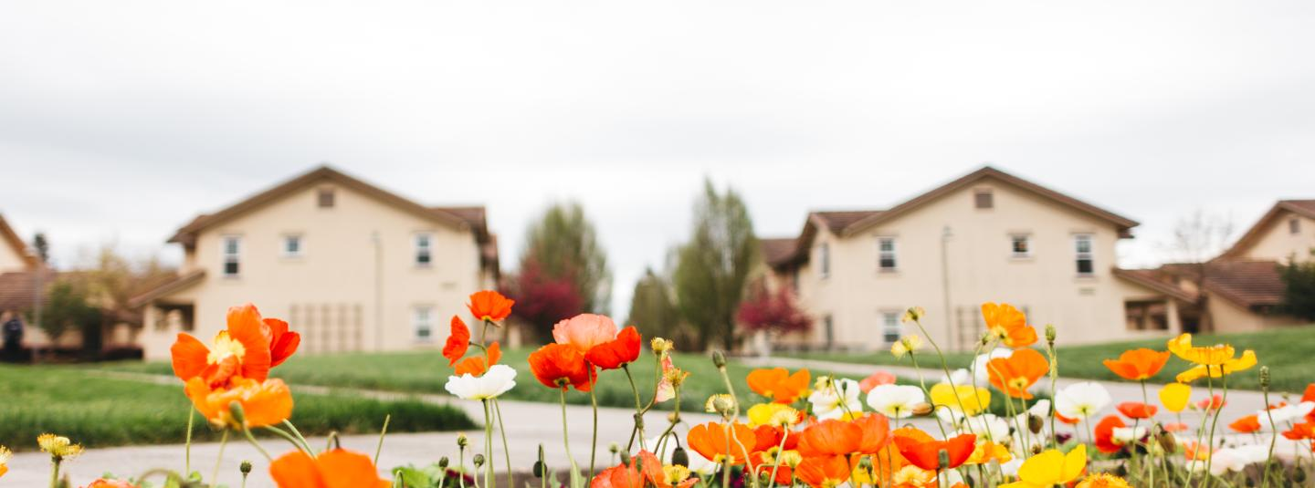 Poppy flowers with background of Tuscany housing village